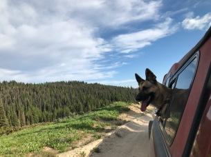 Bella enjoys the views
