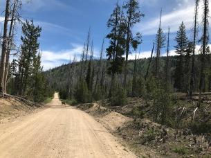 Deer on the Dirt Road
